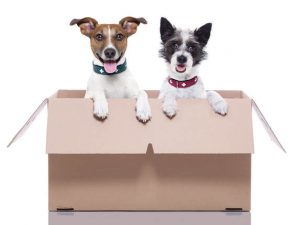 Pets are in a moving box